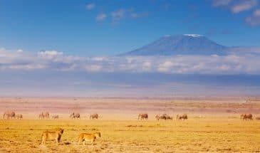 Kilimanjaro und Löwen