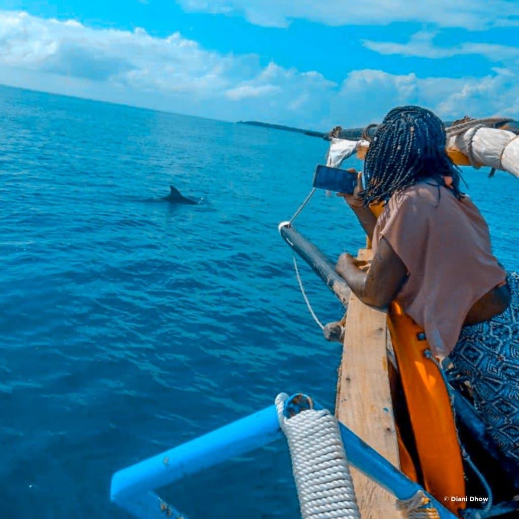 Diani Dhow Safari Delfinbeobachtung