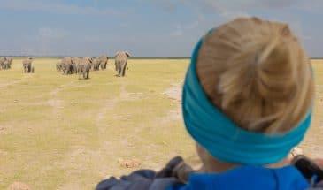 Amboseli Elefantenherden