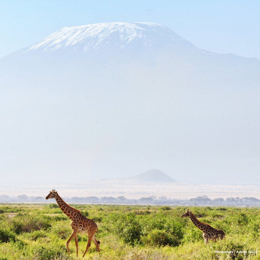 Amboseli Nationalpark Kilimanjaro