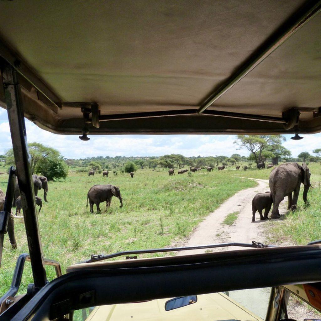 Tarangire Elefantenherde