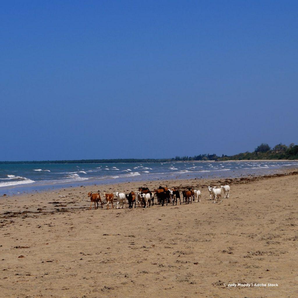 Bagamoyo Strand