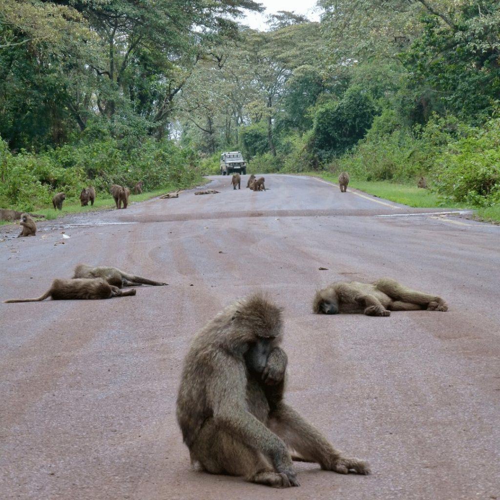 Ngorongoro Forest