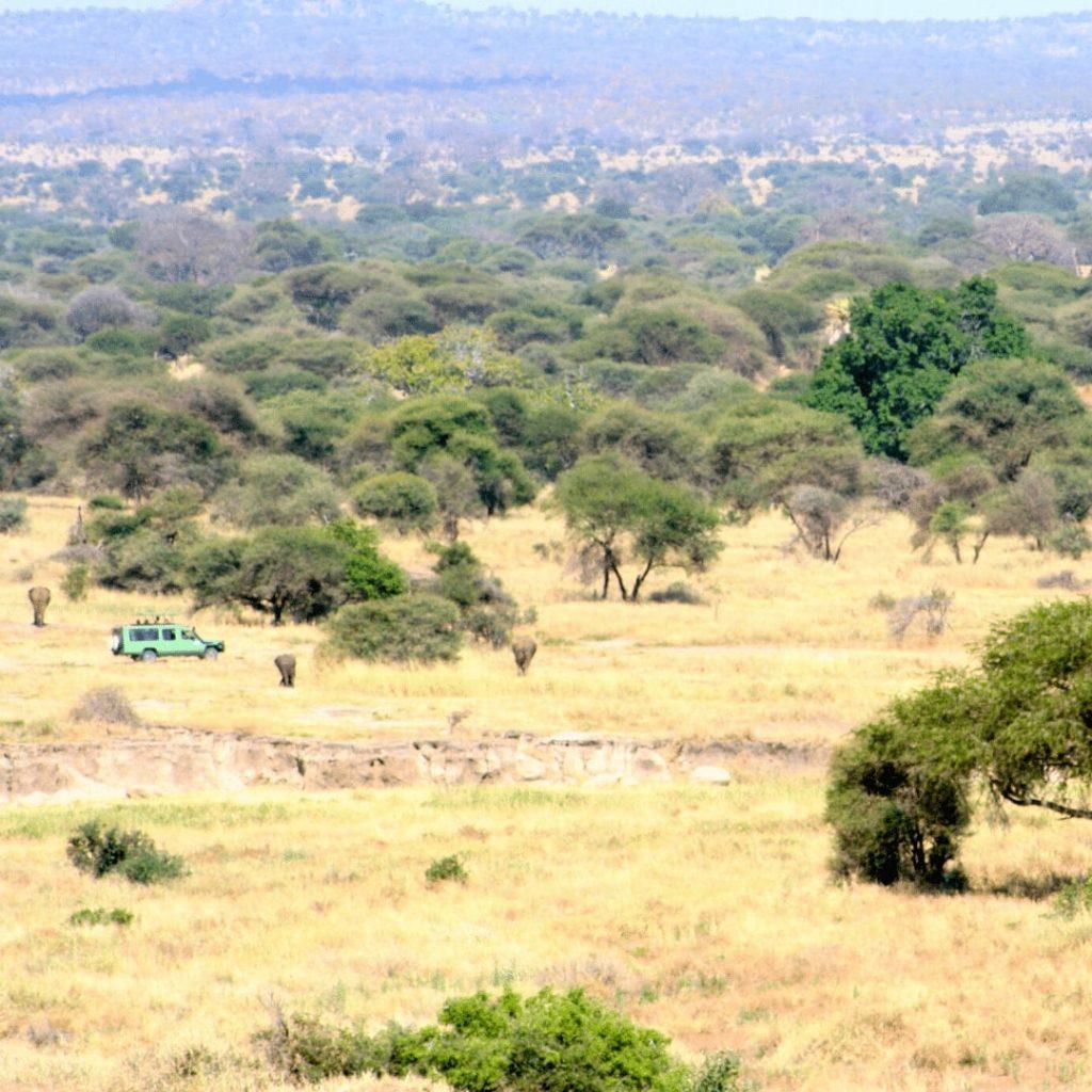 Tarangire Safari