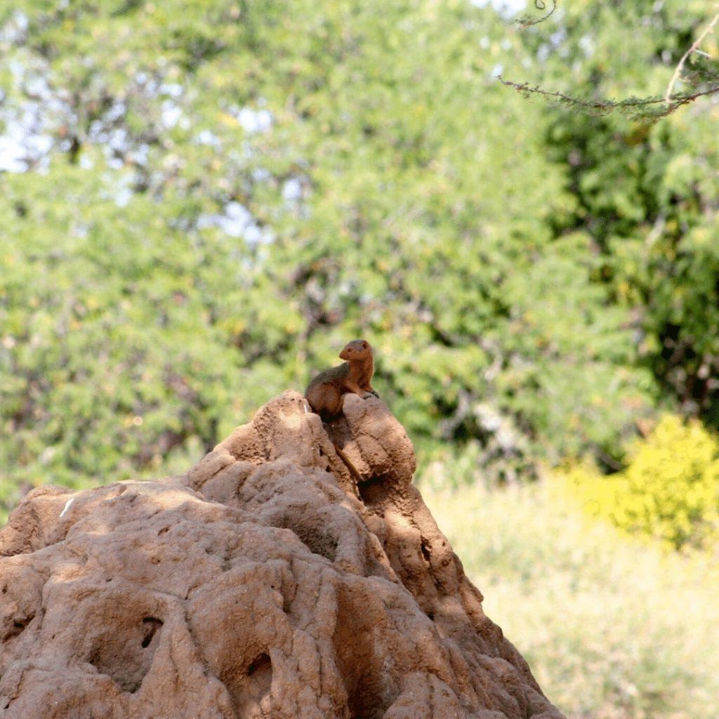 Tarangire Termitenhügel