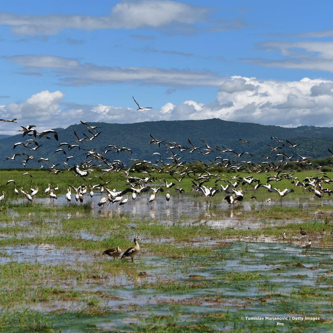 Lake Manyara Aussichtspunkt