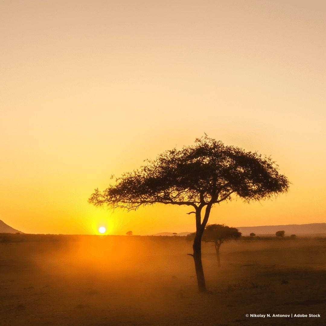 Sonnenaufgang und Schirmakazie