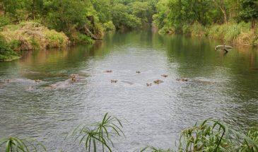 Mzima Springs in Tsavo West