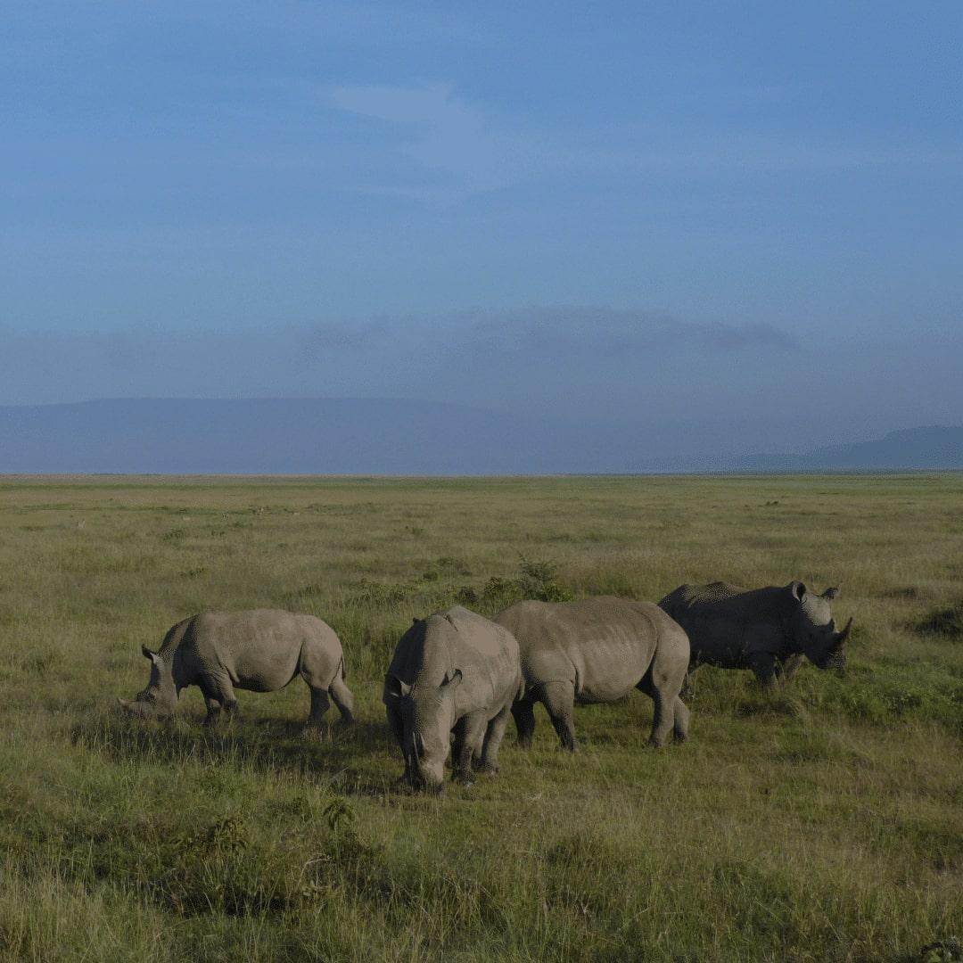 Lake Nakuru Nationalpark Nashörner