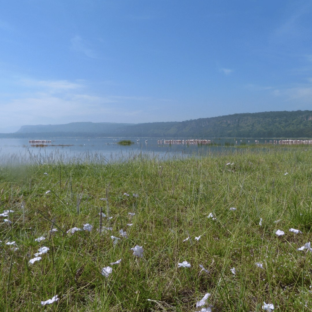 Nakuru See Panorama
