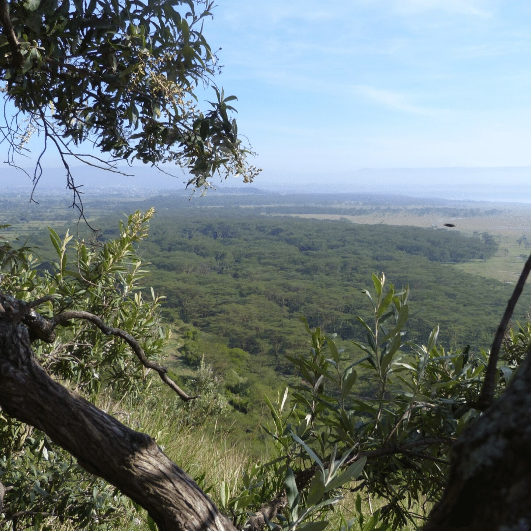 Nakuru Baboon Cliff View Point