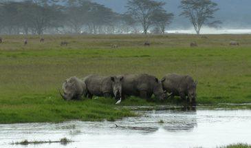 Nakuru Nationalpark