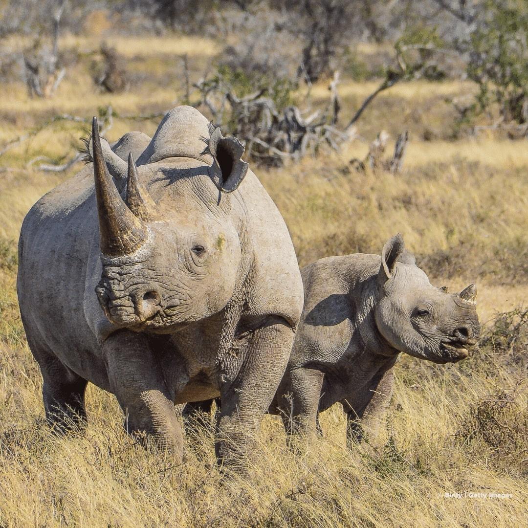 Nuglia Rhino Sanctuary