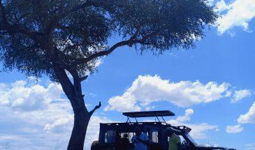 Masai Mara Picknick-Lunch