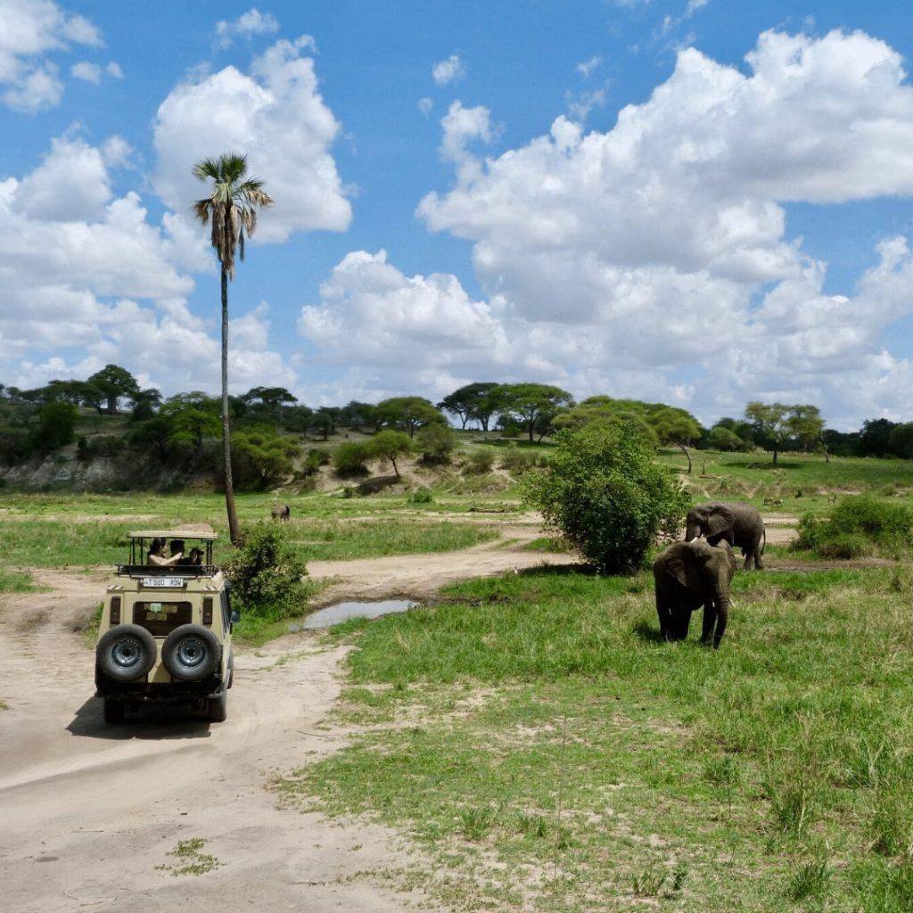 Safari Tarangire Nationalpark