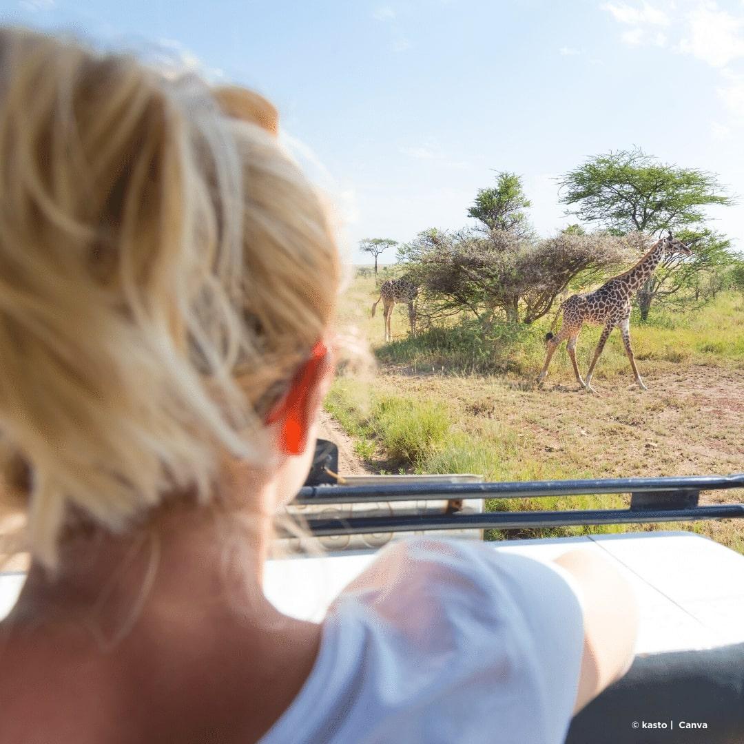 Masai Mara Pirschfahrten