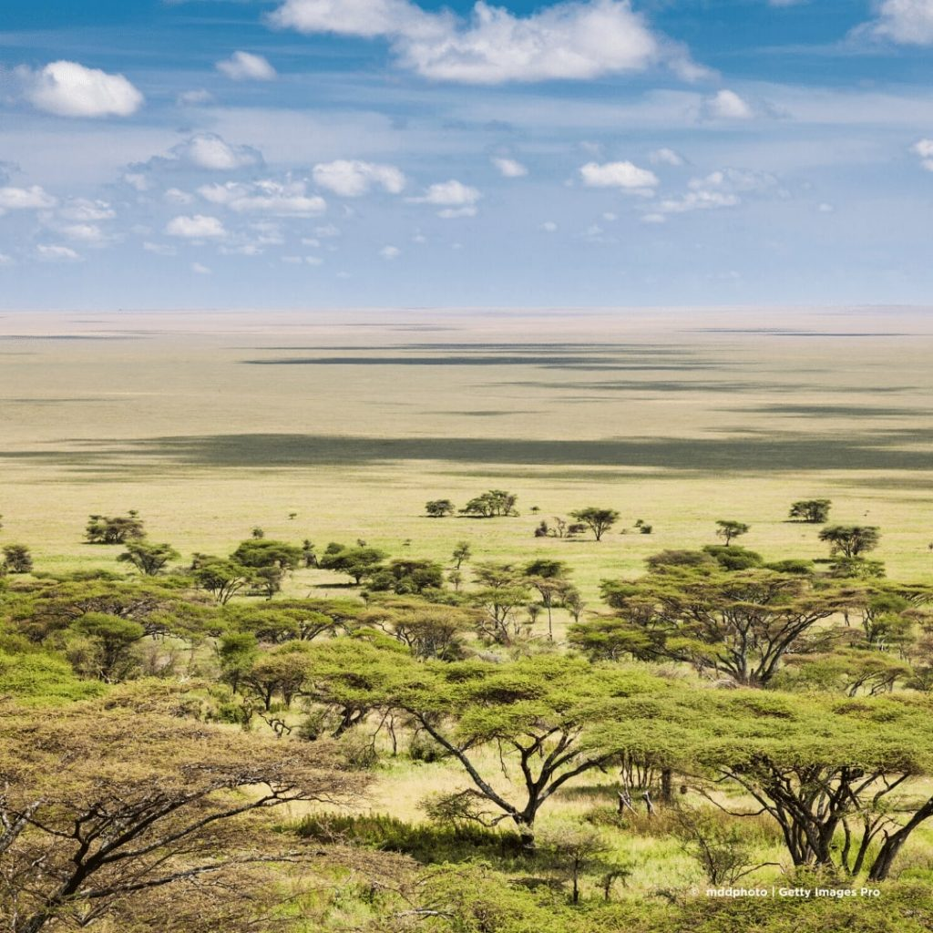Serengeti Ballonsafari Vogelperspektive