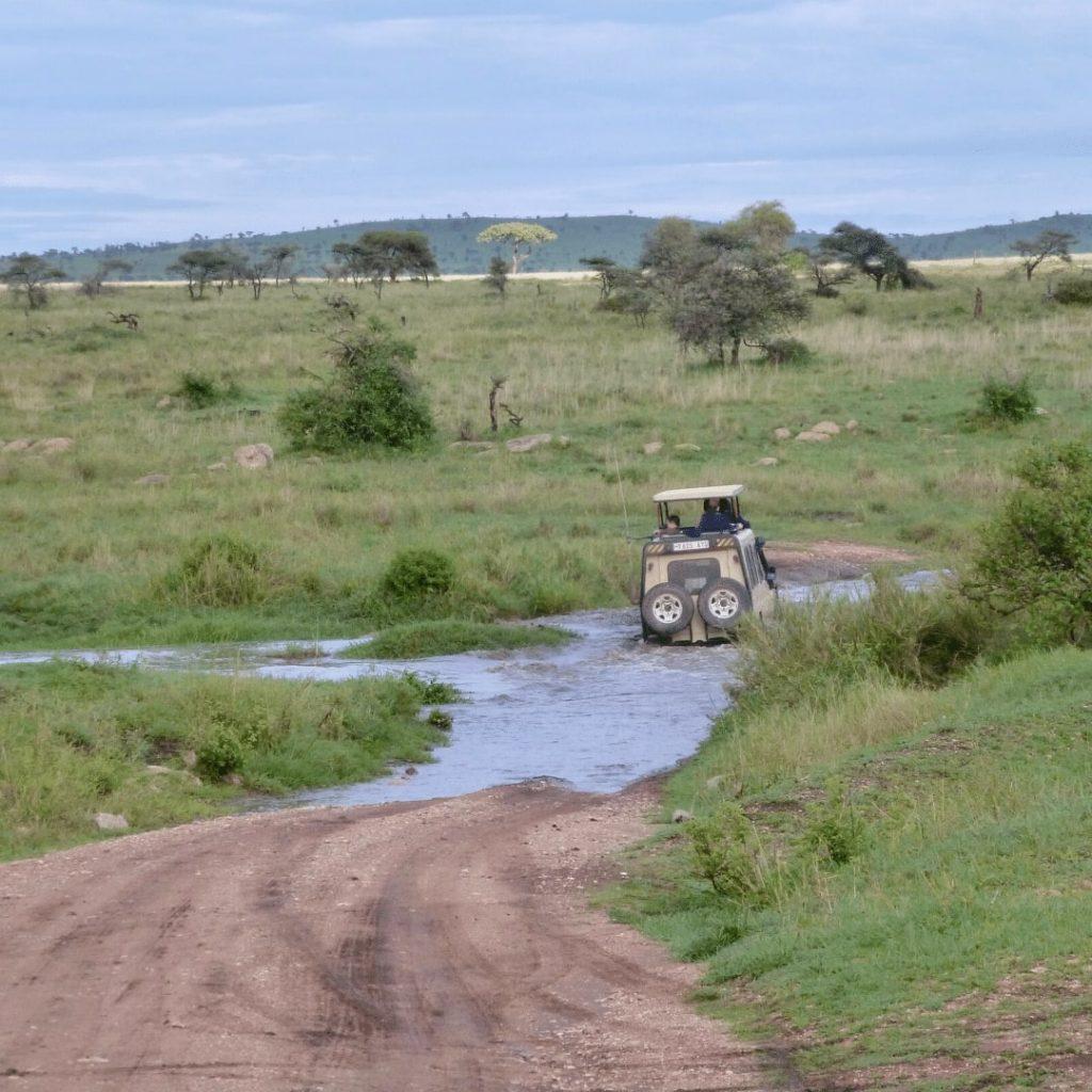 Serengeti Pirschfahrt