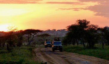 Auf Safari in Serengeti