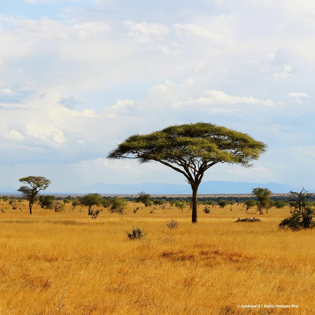 Tsavo Ost Landschaft