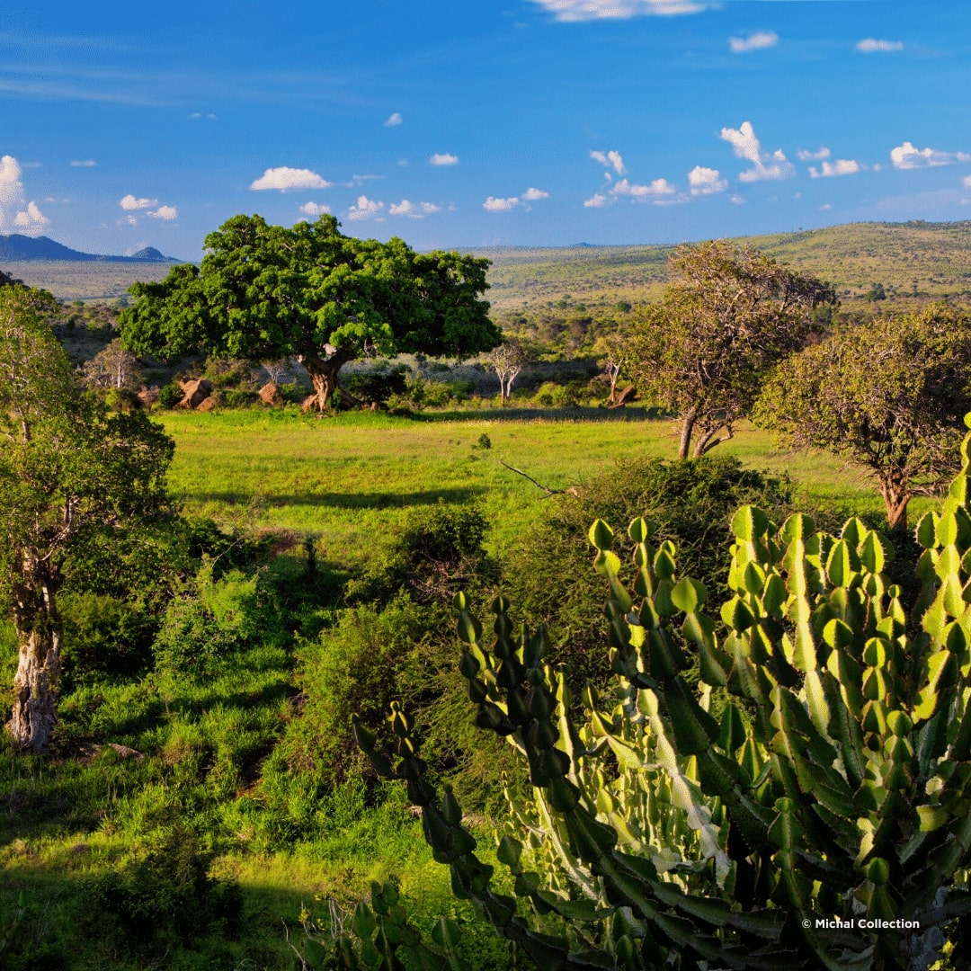 Grüner Tsavo West Nationalpark