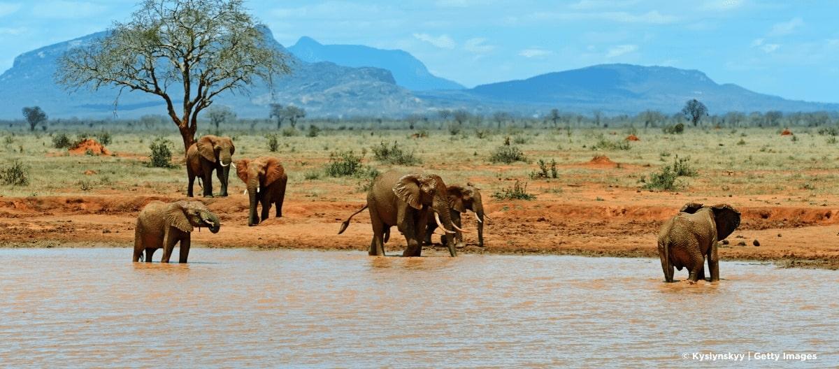 Yatta Plateau Elefanten